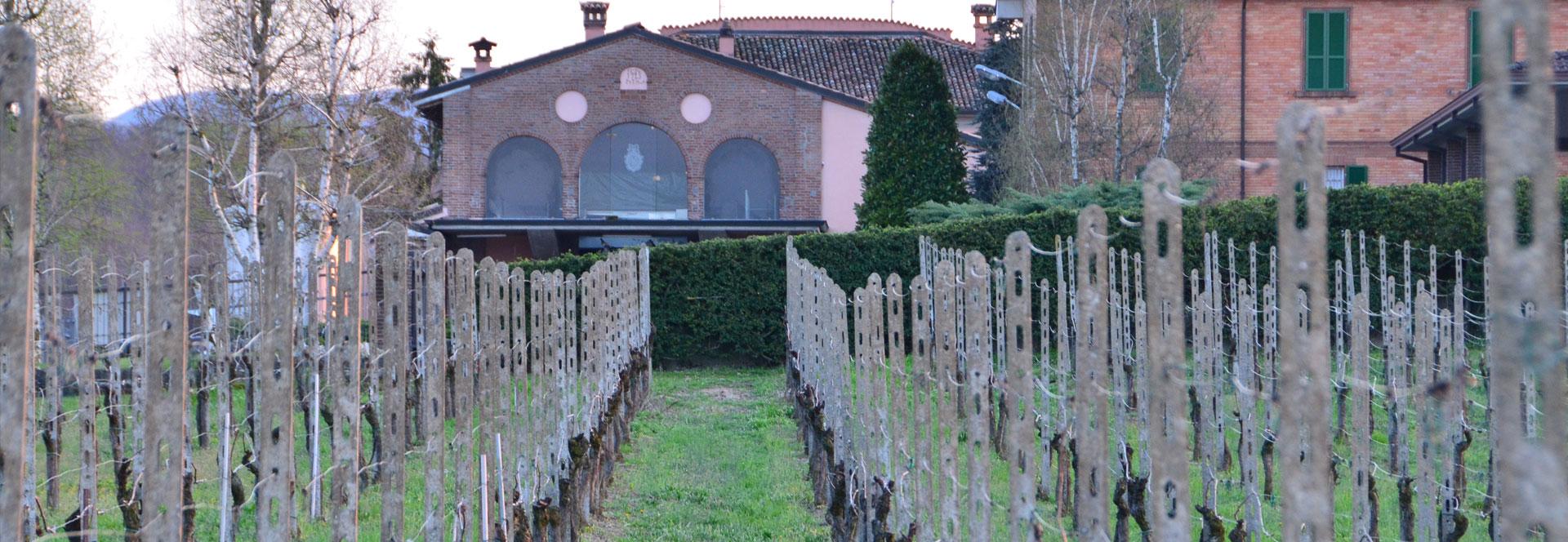 Vigna Azienda Montesissa